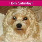 Holly saturday feature image